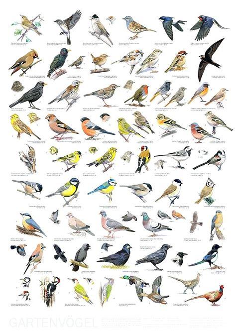 british garden birds poster garden ftempo