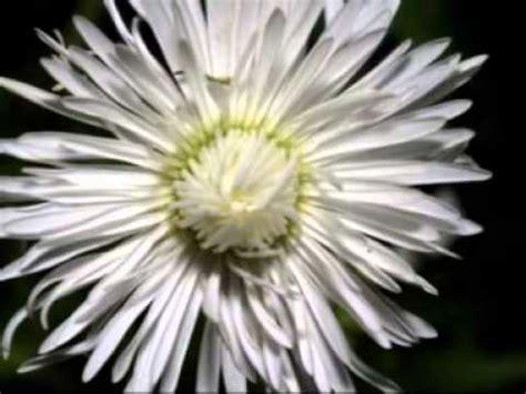 il valzer dei fiori tchaikovsky waltz of the flowers valzer dei fiori