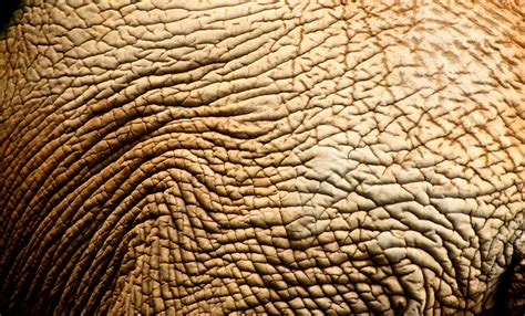 pattern photoshop skin 26540 skin texture anderson mancini elephant zoo sp