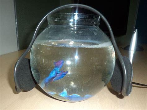 Best Fish For Office Desk ऑफ स क ड स क पर रख य य श नद र मछल य Best Fish For Your Office Desk ऑफ स क ड स क पर