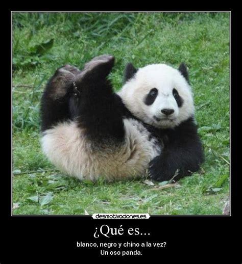 Memes De Pandas - 191 qu 233 es desmotivaciones