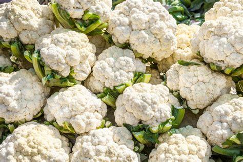 Bibit Bunga Kol jual benih bibit biji bunga kembang kol cauliflower