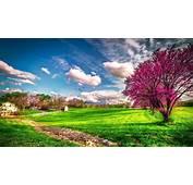 Landscape Beautiful Spring Nature  HD Wallpaper