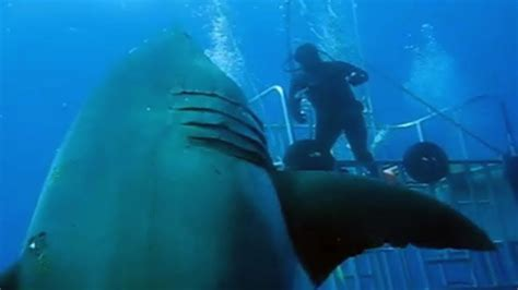 what is the largest great white shark ever recorded primer caught on camera 2017 largest great white shark ever
