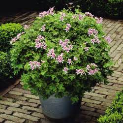 buy trees and shrubs online for less