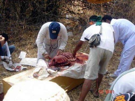 imagenes satanicas muy fuertes fotos horribles de canibalismo fotos muy fuertes dogguie