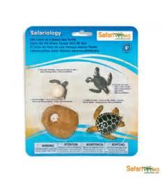 ciclo de vida de la tortuga de mar montessori para todos