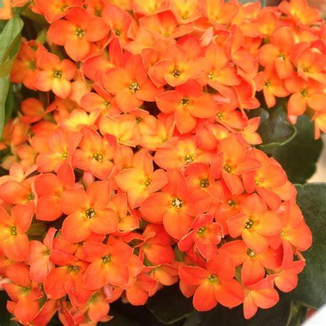 welche teppiche sind pflegeleicht zimmerpflanzen pflegeleicht diese zimmerpflanzen sind