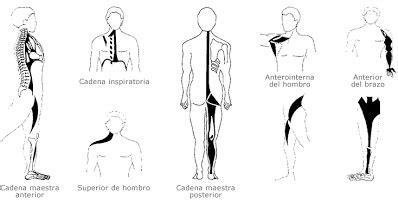 cadenas musculares philippe cignion pdf teor 205 a de las cadenas musculares mitako de estiramiento