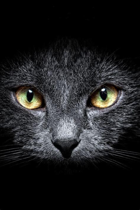 black cat wallpaper iphone 640x960 black cat in the dark iphone 4 wallpaper