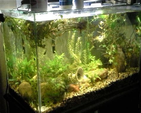 Truk Kontainer Aquarium duckweed algae and snails forever my aquarium club
