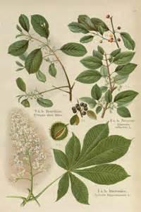 botanical prints rosemary s blog