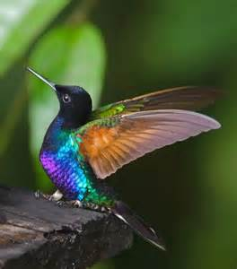 hummingbird colors to paint
