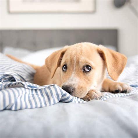 Bilder Im Bett by Hund Im Bett Macht Gesund Und Gl 252 Cklich Brigitte De