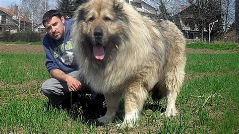 best male blogs fotos de vergas grandes big cock photos top 10 guard dogs in the world biggest guard dog