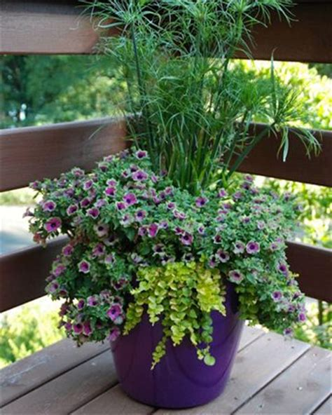 gardens in containers 700 best images about container gardening ideas on