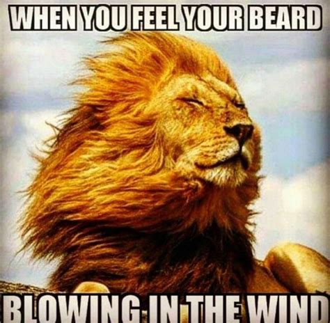 Funny Beard Memes - 17 best images about all about beard on pinterest