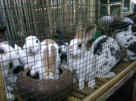 Jual Kolam Terpal Madiun budidaya ternak budidaya ternak kelinci