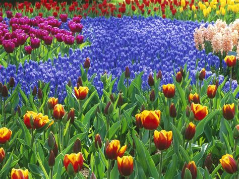 Photos The World S Largest Flower Garden Garden Variety Images Of Flowers Garden