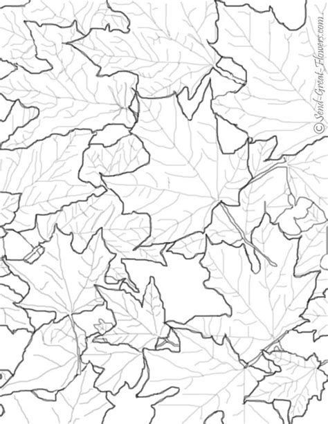 leaves coloring pages for adults free coloring pages of autumn leaf