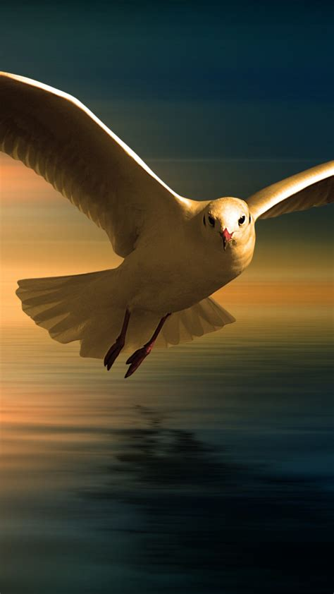 seagull  wallpapers hd wallpapers id