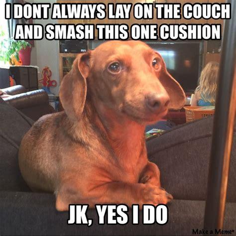 Funny Dachshund Memes - best 25 dachshund meme ideas on pinterest pet humor