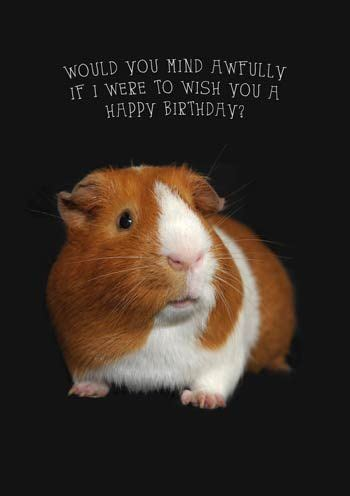 Happy Birthday Guinea Pig Card Greeting Cards For Guinea Pig Lovers Http More