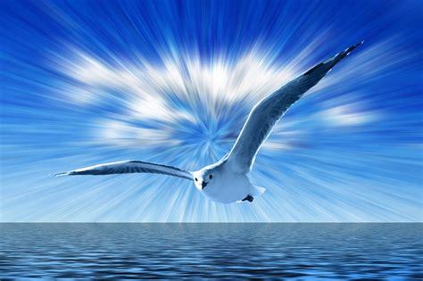 volo gabbiano illustrazione gratis gabbiano cielo volare nubi