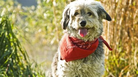 Looks For Your Pet Isnt Walking Season safety tips for walking your during season