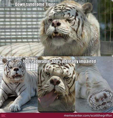 Tiger Meme - down syndrome tiger meme pictures to pin on pinterest