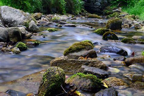photo gratuite foret montagne torrent riviere image