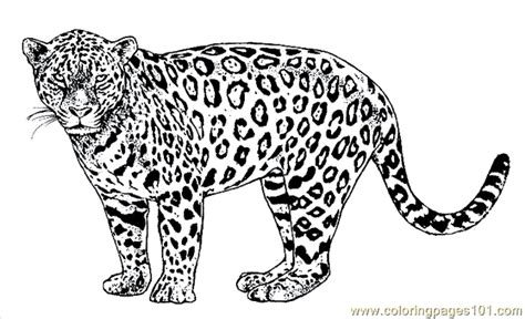lion tiger coloring page 26 printable coloring page for