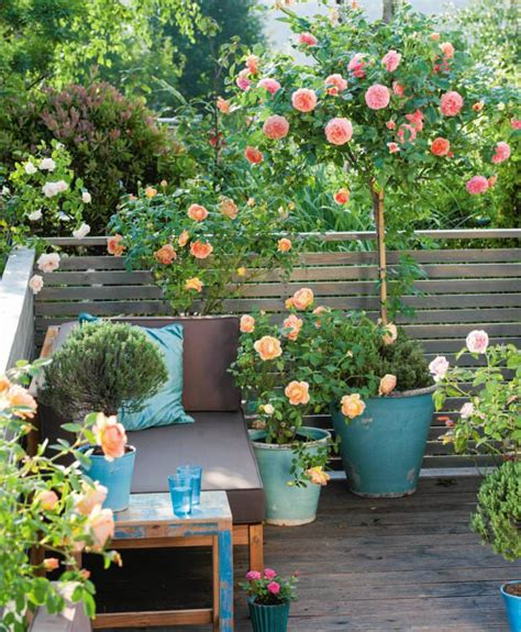 flowers for balcony garden small garden growing roses in containers balcony