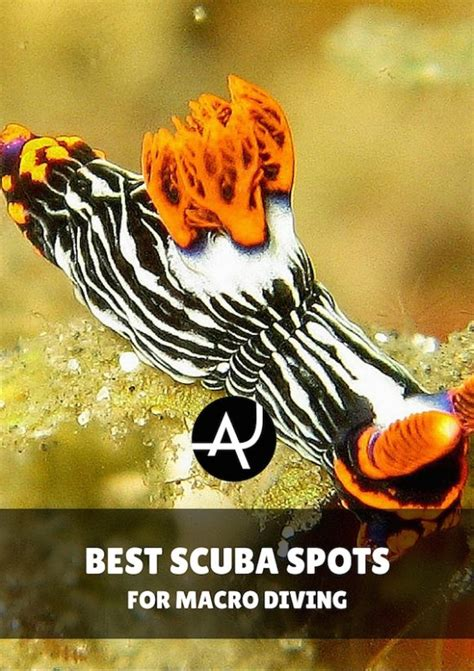 best dive spots the 10 best macro diving spots in the world the