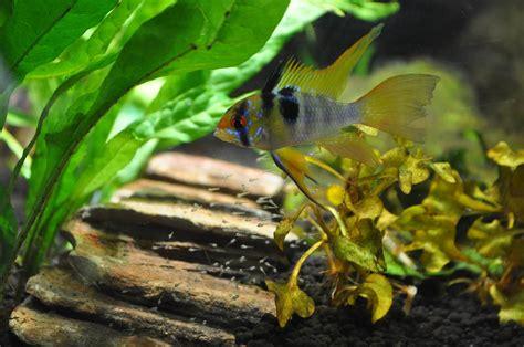 wann beißen welche fische wann kann ich die fische einsetzen aquarium wissen
