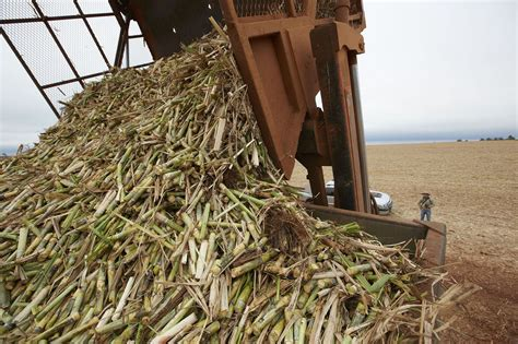 How To Make Paper From Sugarcane Waste - sugar waste use as component of hydraulic concrete