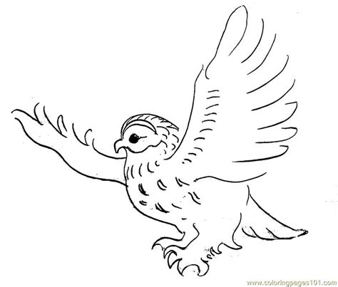 printable flying owl coloring pages how to draw flying owl