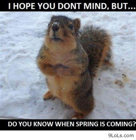 Funny Spring Memes - humorous animals funny kids quotes and animals on pinterest