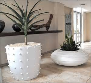 17 best ideas about large indoor plants on