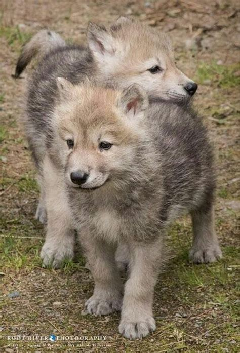 Smiling Wolf das leben ist magisch und fantastisch diese seite ist