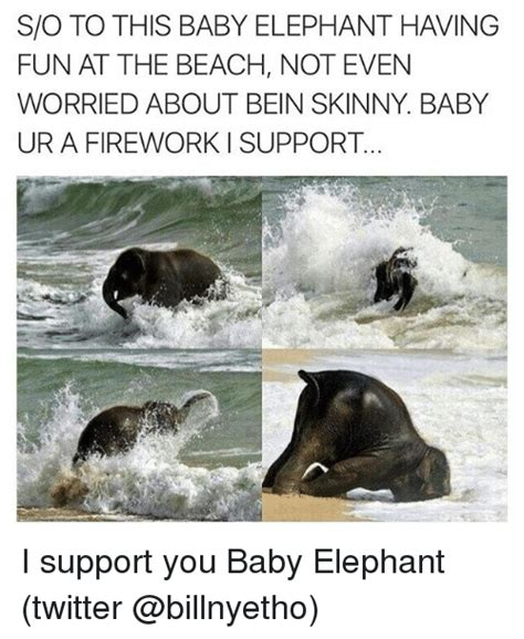 Baby Elephant Meme - svo to this baby elephant having fun at the beach not even