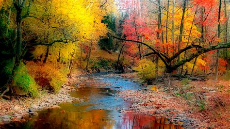 colors from nature autumn variety of color trees with yellow green leaves and
