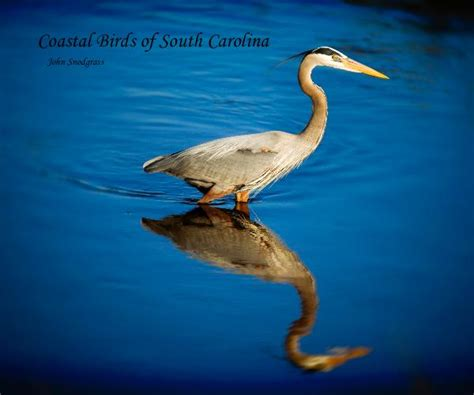 coastal birds of south carolina by john snodgrass blurb