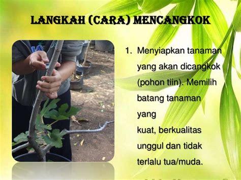 Pisau Okulasi Cangkok budidaya tanaman cangkok