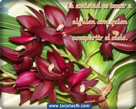 imagenes bonitas de amistad con flores im 225 genes bonitas con flores y frases de amistad para