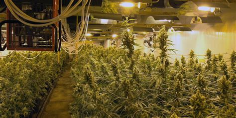 the growing room create the best climate for marijuana grow room