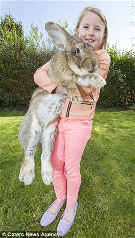 Darius the world's biggest rabbit is facing competition