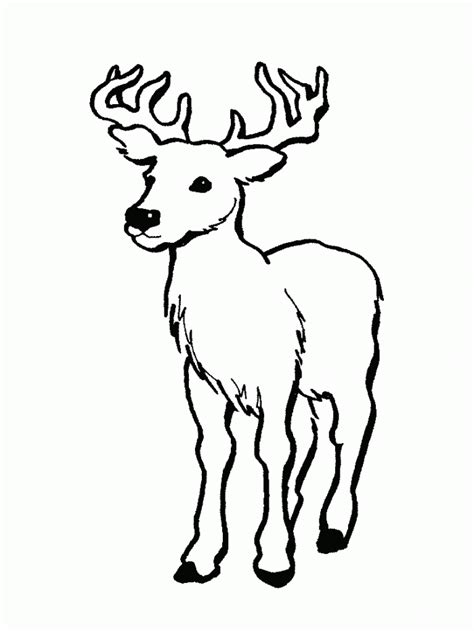 Detailed Deer Coloring Page | detailed deer coloring pages coloring home