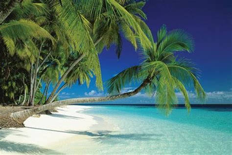 Tropical L by Maldives And Sea Palm Trees On A Tropical Island