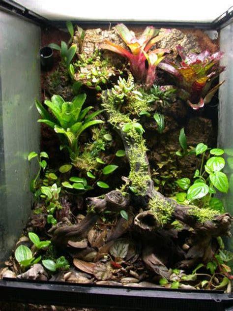 vriesea racinae     grown